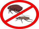 Как избавиться от клопов, клещей, тараканов и.т.д.